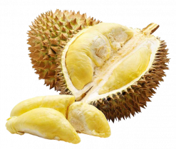 produits - fruits - durian-02