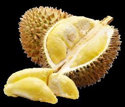 produits - fruits - durian-02